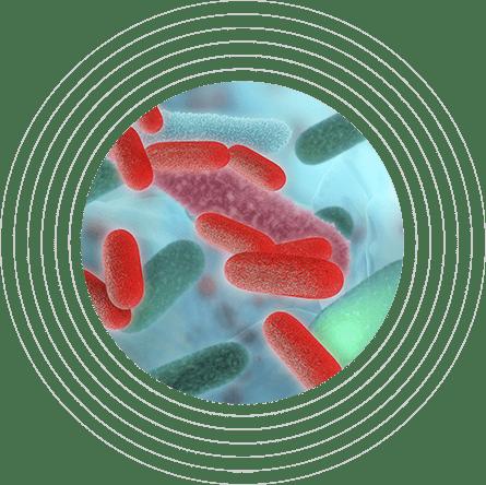 PATIËNTEN MET EEN RISICO OP EEN VERSTOORD MICROBIOOM
