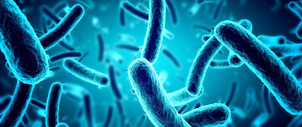 HET MICROBIOOM VAN DE MOND